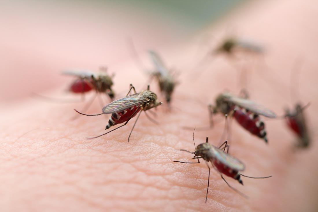 Bạn có biết sốt xuất huyết kiêng gì để bảo vệ sức khỏe?